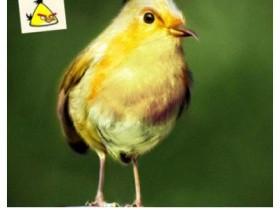 愤怒的小鸟现实版