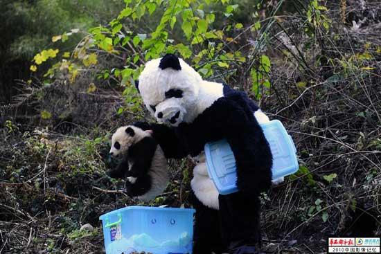 原来是这样卓熊猫的