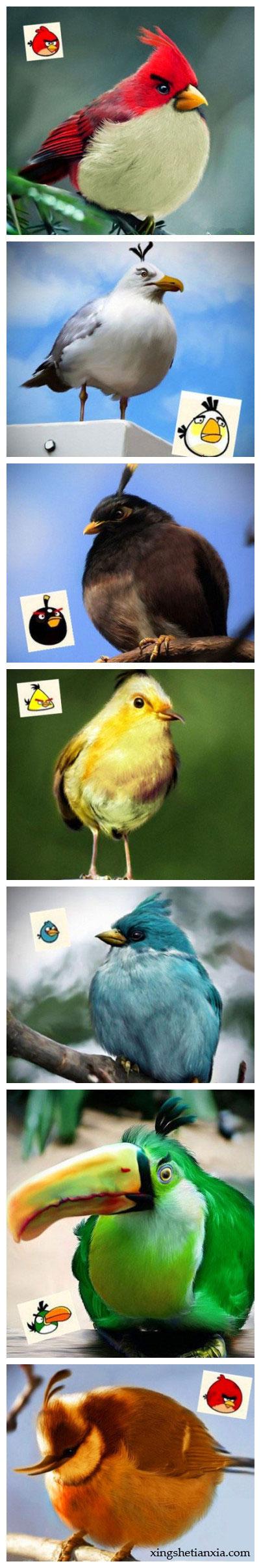 愤怒的小鸟现实版,现实中的愤怒的小鸟