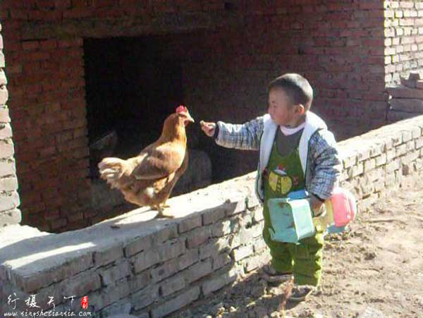 农村孩子的童年;喂鸡