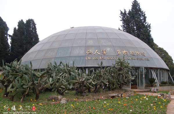 仙人掌多肉植物馆