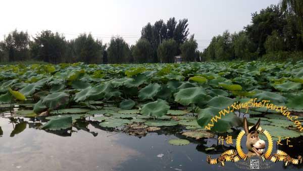 长沟湿地公园